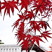 紅葉+寺院=京都