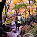 【日本】關西紅葉之旅 • 精華照片