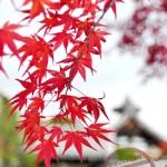 【京都】嵐山紅葉 ③《天龍寺》庭園參拜 + 嵐山竹林