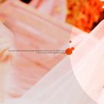 婚紗相 – 第一日 – 試衫,溝通日