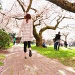 【花見】西雅圖的櫻花